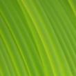 Áttetsző zöld Easy PET-G Refill